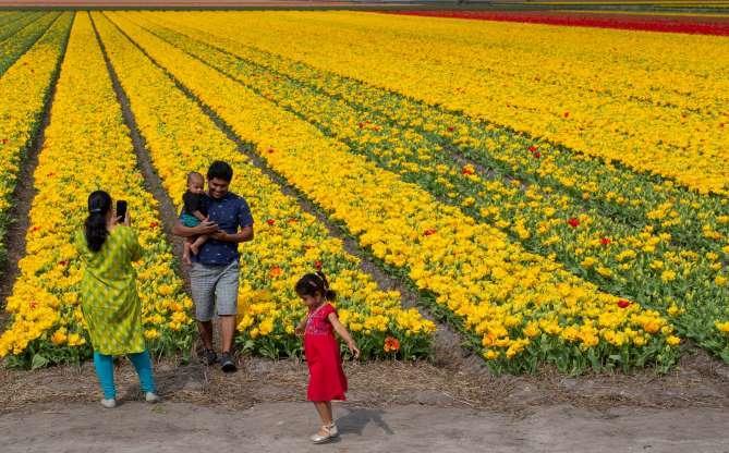 Indah Nya Hamparan Bunga Tulip Riauone Com Berita Nusantara Terkini